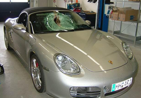 Porsche Accident: Bird