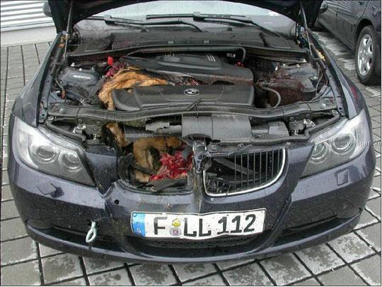 Car Accident Car Accidents Deer Statistics