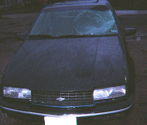 Hit By Turkey: Accident Shattered Windshield